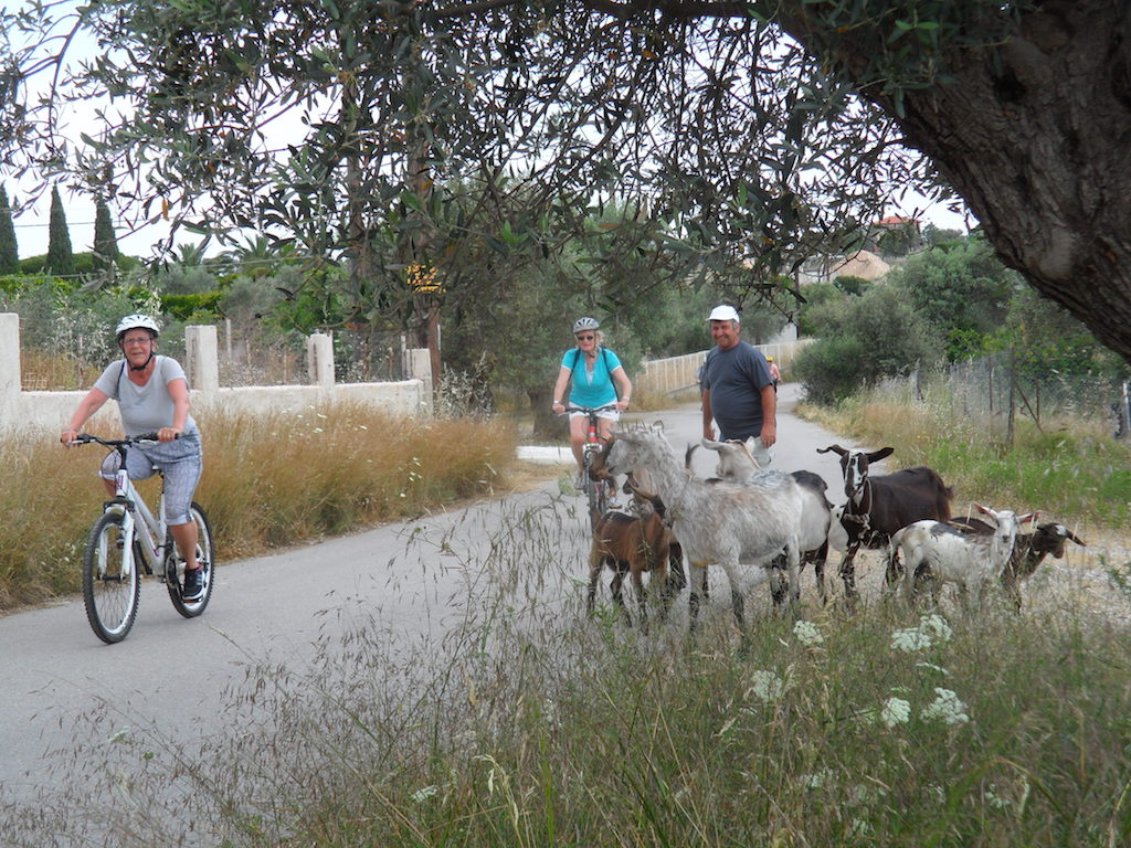 Cycling / Eretria's lowlands and olive-groves